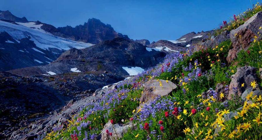 「レーニア山の野草」アメリカ, ワシントン州