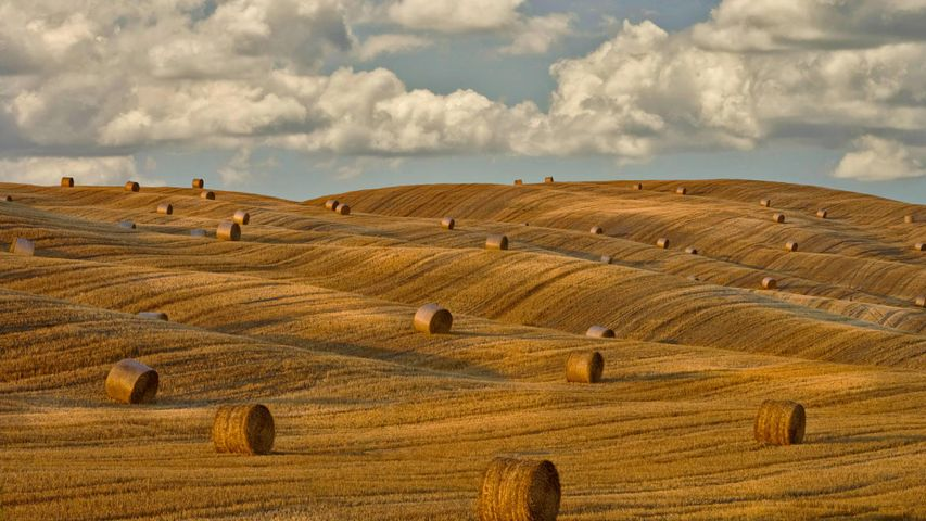 「干し草ロールのある風景」イタリア, トスカーナ州