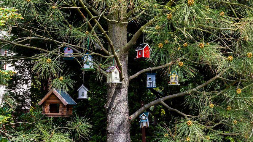 「ツリーに飾られたバードハウス」ドイツ