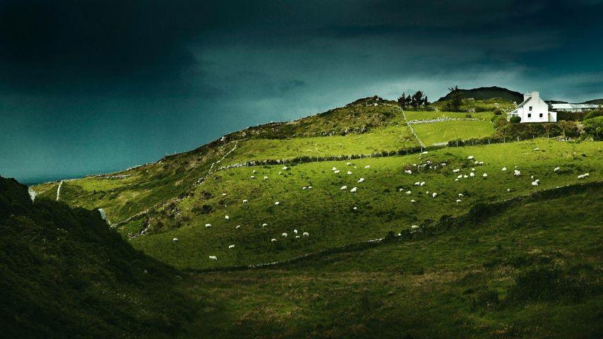 「シープスヘッド」アイルランド