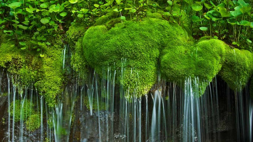 「シェナンドー国立公園」アメリカ, バージニア