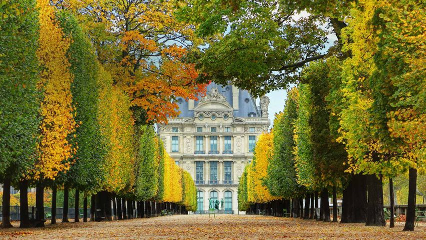 「テュイルリー庭園の並木道」フランス, パリ