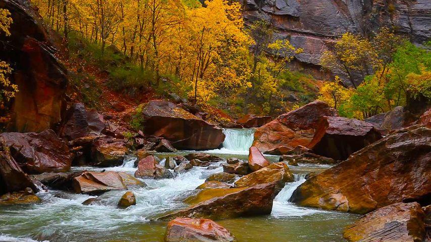 「ノース・フォーク・ヴァージン川」ユタ州, ザイオン渓谷