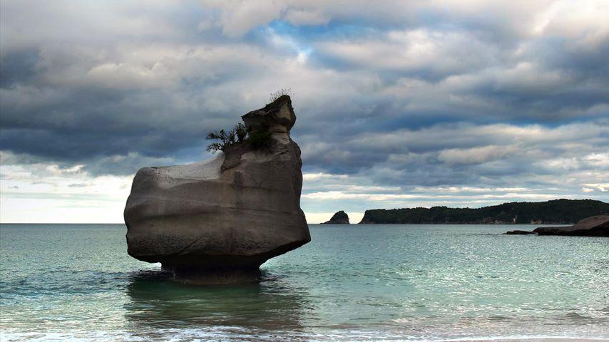 「カセドラルコーブ」ニュージーランド, 北島