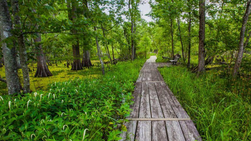 「ジーン・ラフィット歴史公園&保護区」米国ルイジアナ州