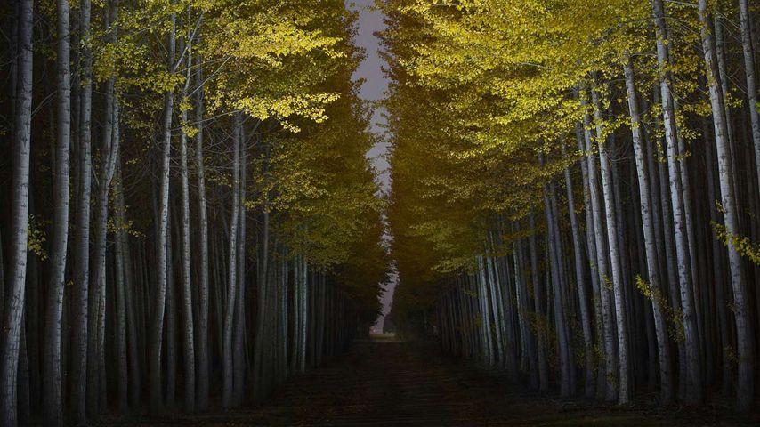 「ボードマン・ツリーファーム」米国, オレゴン