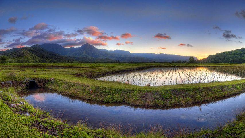 「ハナレイ渓谷」ハワイ, カウアイ島