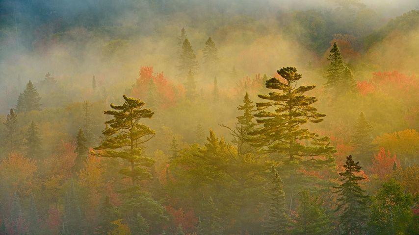 「スペリオル湖州立公園」カナダ, オンタリオ
