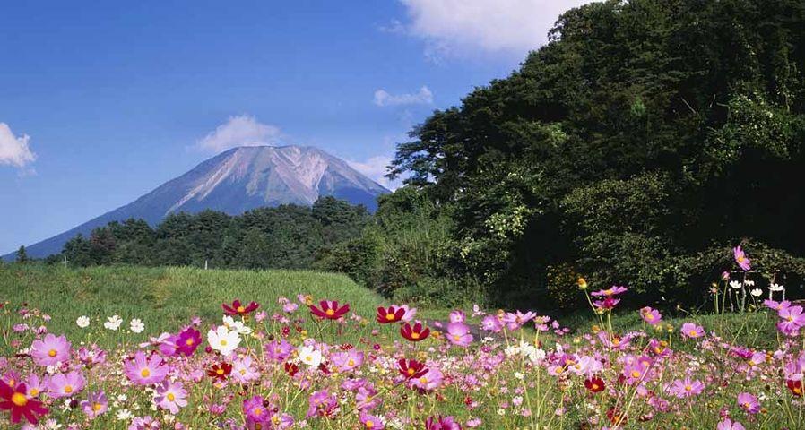 「大山とコスモス」鳥取, 大山町