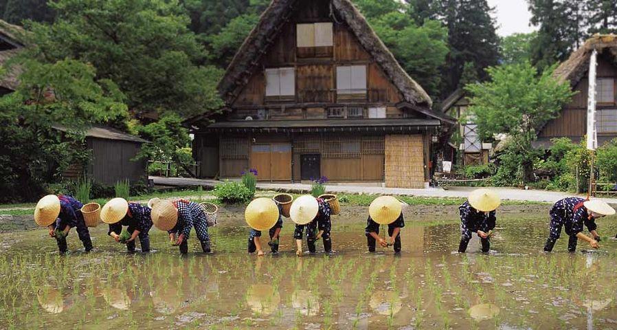 「白川郷田植え祭り」岐阜県, 飛騨市