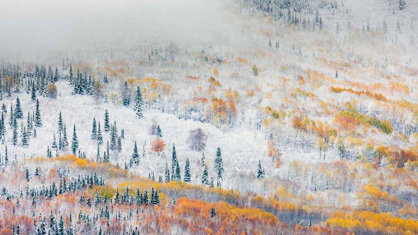 「フェアバンクスの雪」アメリカ, アラスカ