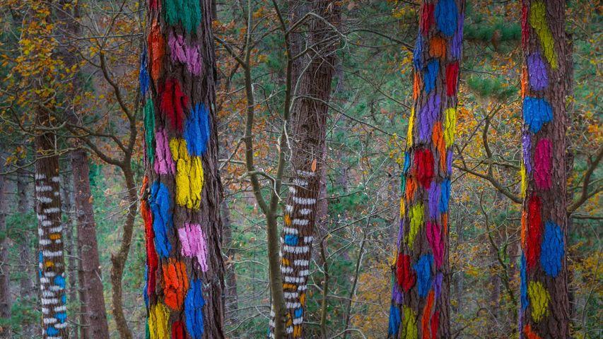 「オマの森」スペイン, ビスカヤ県