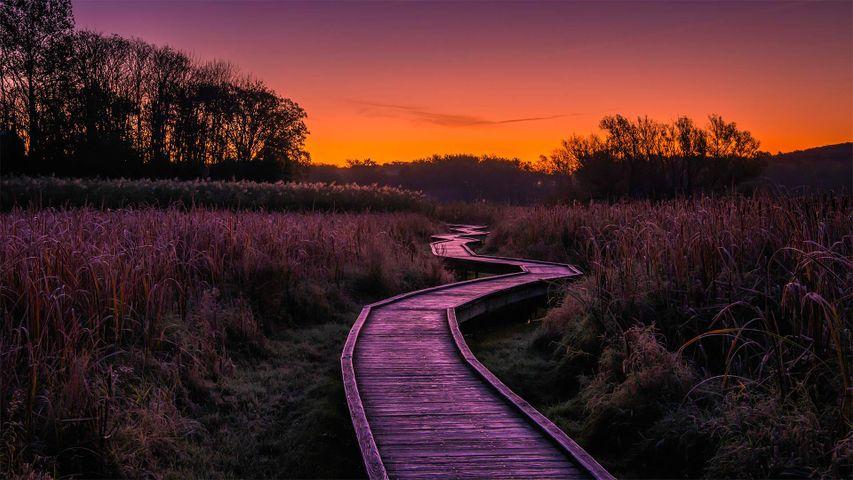 「ワワヤンダ州立公園のトレイル」米国, ニュージャージー州
