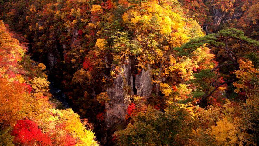 「鳴子峡の紅葉」宮城, 大崎市