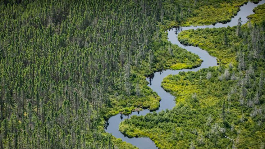 「ムースヘッド湖そばの湿地」米国, メイン州