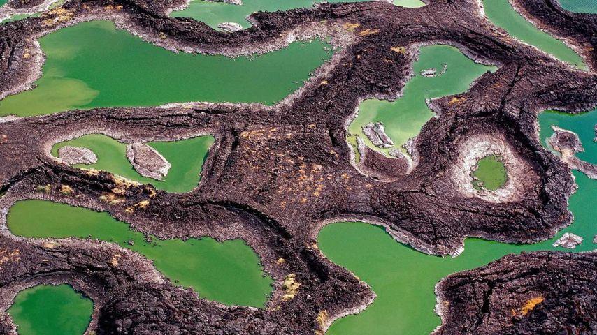 「トゥルカナ湖」ケニア, トゥルカナ