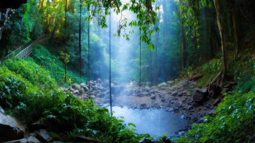 「ドリゴ国立公園」オーストラリア