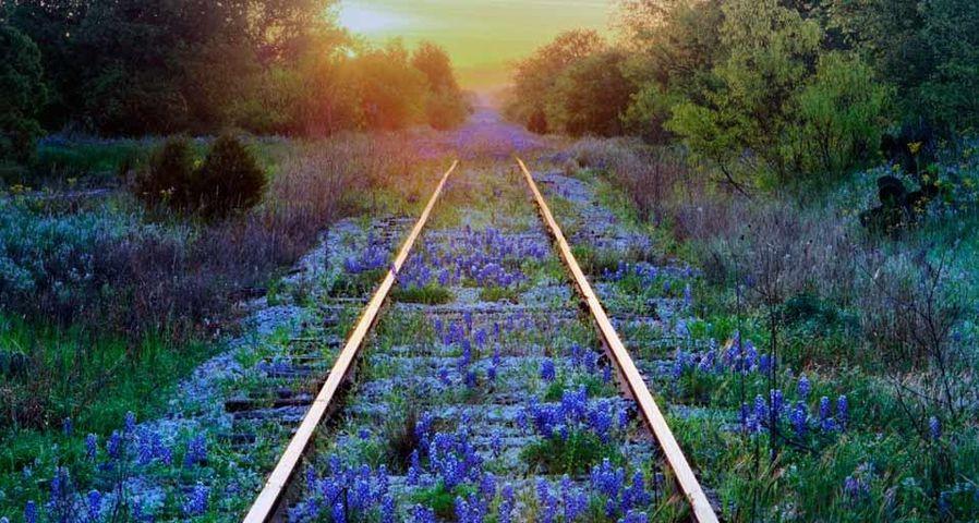「線路とルピナス」アメリカ, テキサス州