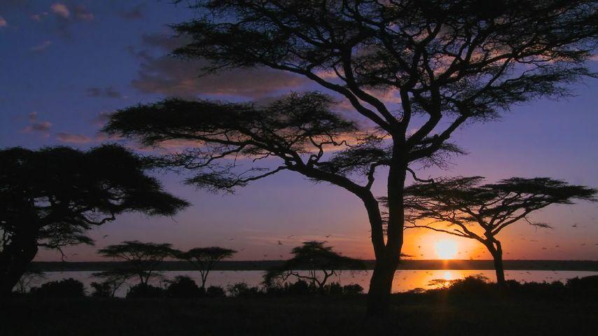 「アンボセリ湖」ケニア, アンボセリ国立公園