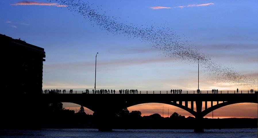 「コングレス・アベニュー橋のコウモリ」アメリカ, テキサス州, オースティン
