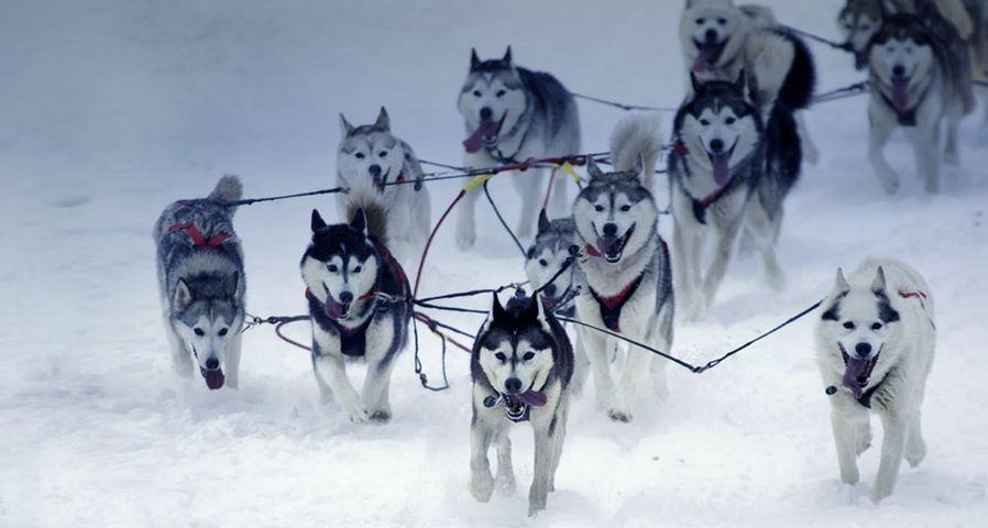 「アイディタロッド犬ぞりレース」アラスカ