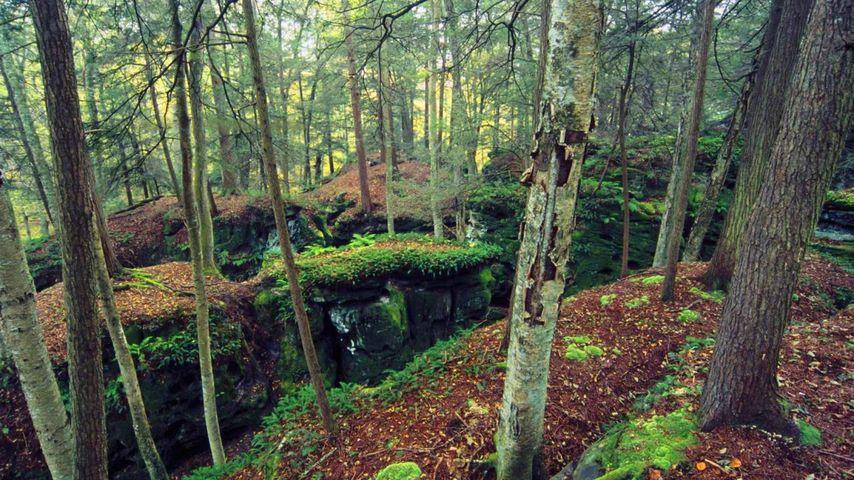 「ベアタウン州立公園」アメリカ, ウェストバージニア州