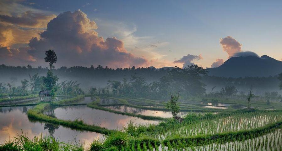 「セラヤ丘陵の棚田」インドネシア, バリ島