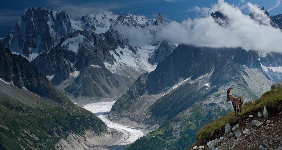 「メール・ド・グラース氷河とアイベックス」フランス, アルプス山脈