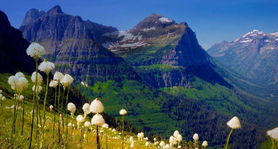 「グレイシャー国立公園のイトラン」アメリカ, モンタナ州