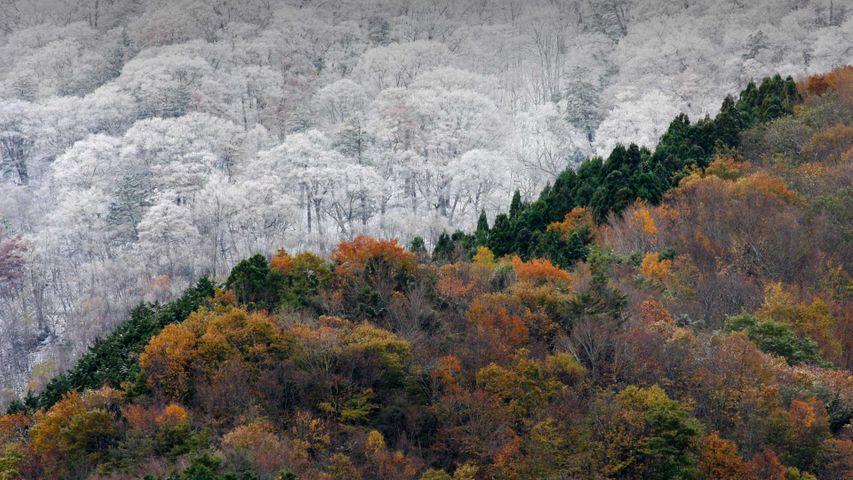 「雪と紅葉」徳島