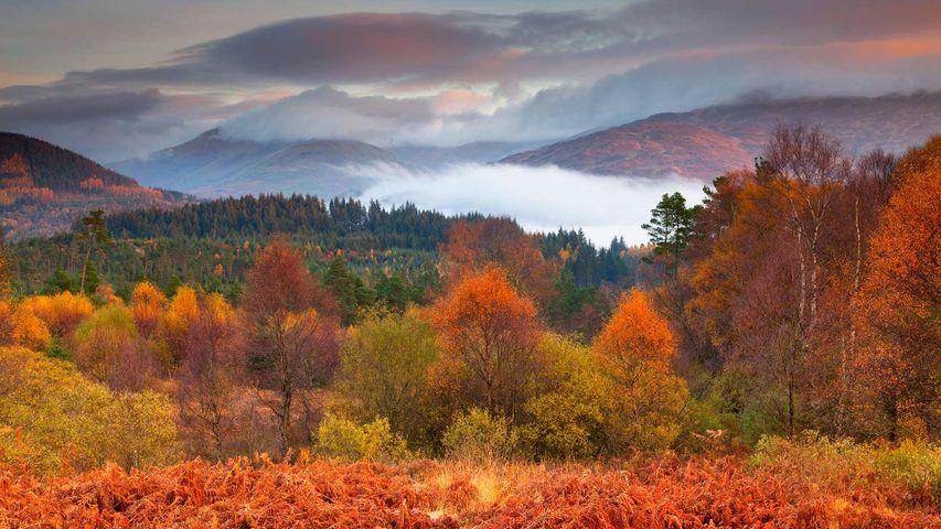 「トロサックス国立公園」イギリス, スコットランド, スターリング