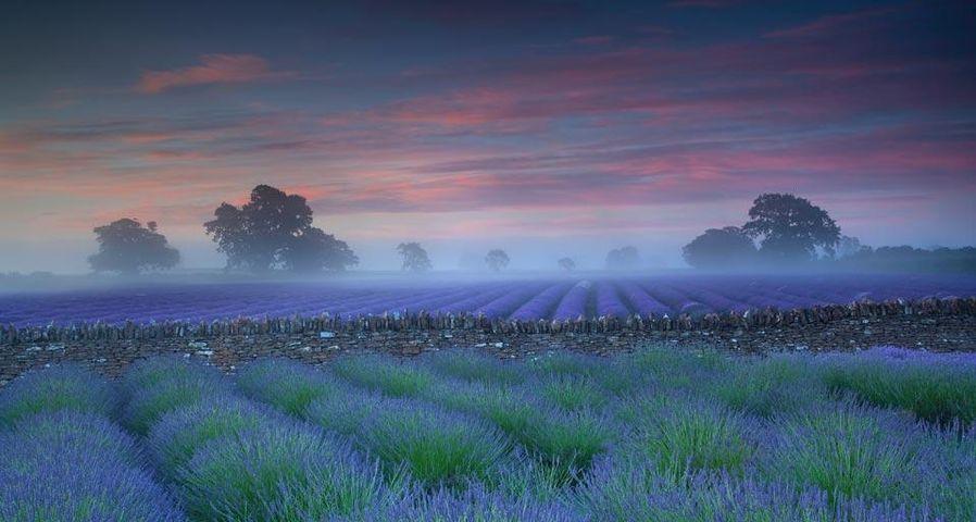 「夕暮れのラベンダー畑」