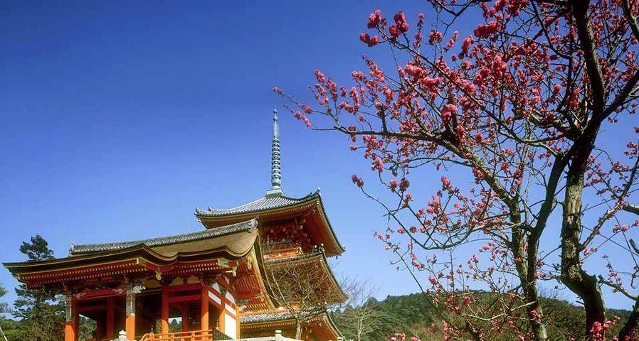 「清水寺と梅」京都, 東山区