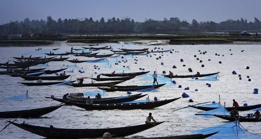 「クルナのエビ漁」バングラディッシュ, クルナ