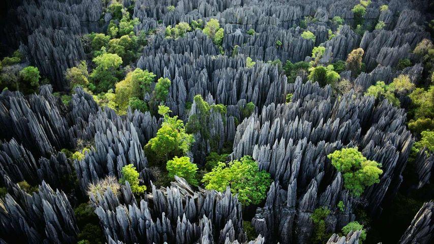 「ツィンギ・デ・ベマラ厳正自然保護区」マダガスカル