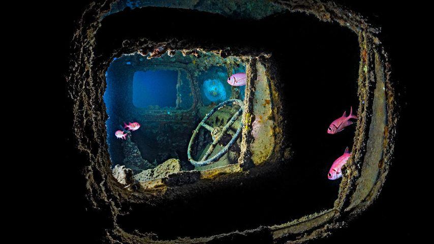 「SSシスルゴルム号」エジプト, 紅海