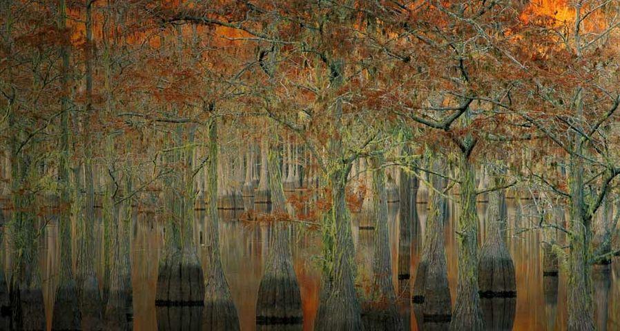 「池に映るイトスギ」アメリカ, ジョージア州, ジョージ・L・スミス州立公園