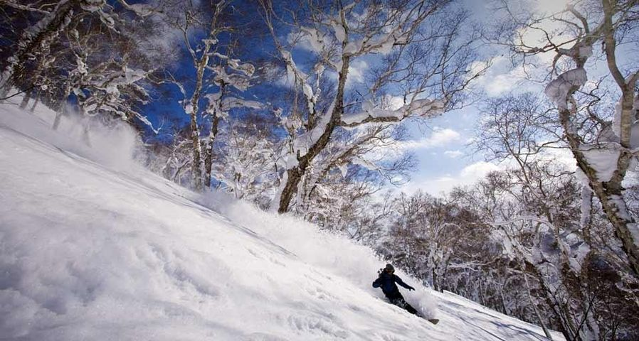 「ニセコバックカントリー」北海道, ニセコ