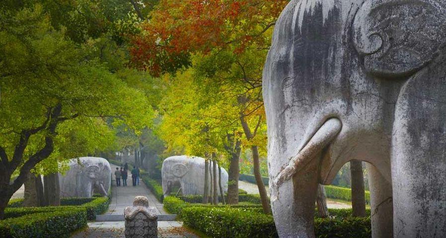 「明孝陵」中国, 江蘇省, 南京, 紫金山
