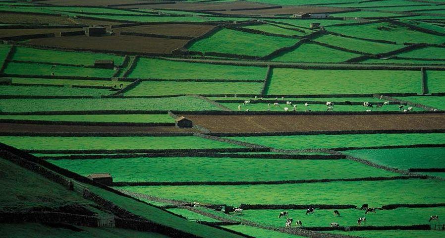 「テルセイラ島の牧草地帯」ポルトガル, アゾレス諸島