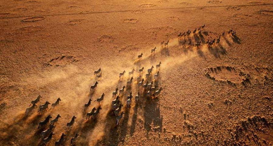 「シマウマの群れ」ナミビア