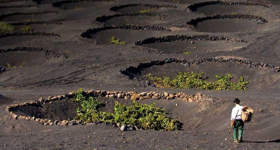 「ランサローテ島のぶどう園」スペイン, カナリア諸島