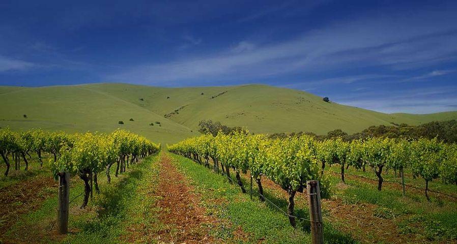 「バロッサバレーのワイン園」オーストラリア, 南オーストラリア州