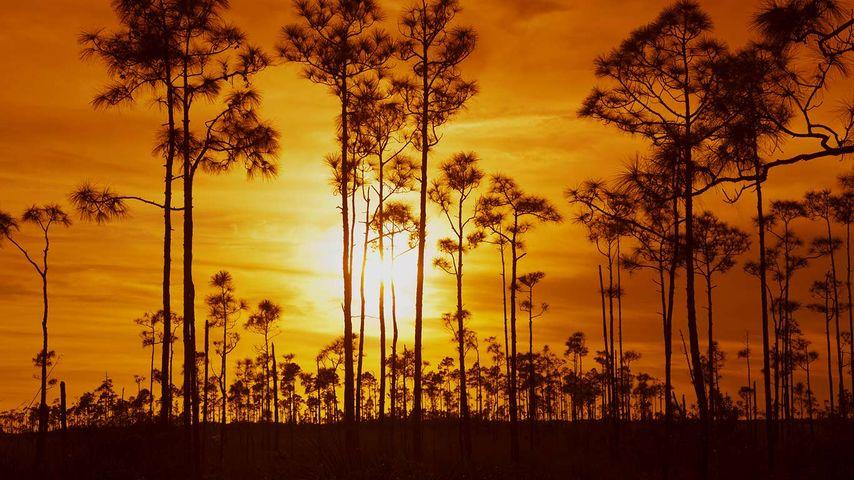 「エバーグレーズ国立公園」アメリカ, フロリダ