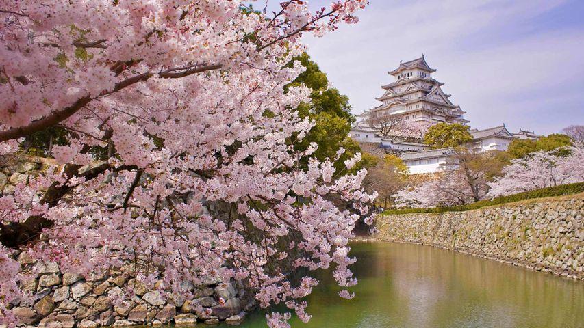 「姫路城と桜」兵庫, 姫路