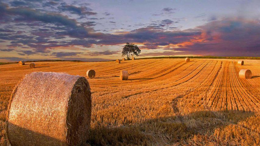 「麦わらロール」デンマーク, ユトランド半島