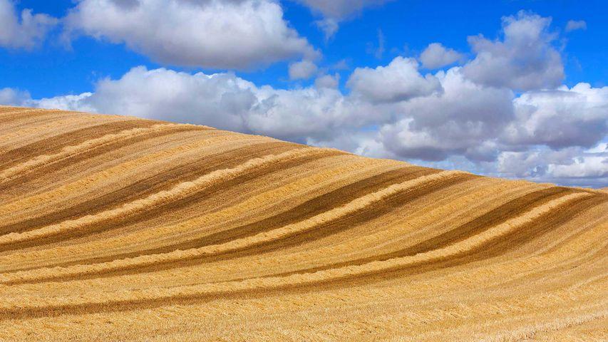 「小麦畑」スペイン, カスティーリャ・イ・レオン州