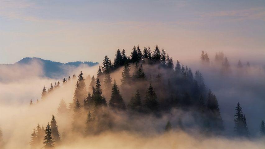 「バイエルンアルプスの霧」ドイツ, バイエルン地方