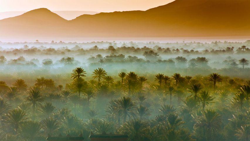 「ナツメヤシの森」モロッコ, ザゴラ