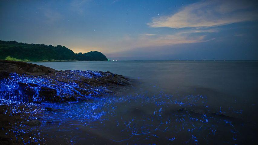 「ウミホタル」岡山, 瀬戸内海沿岸